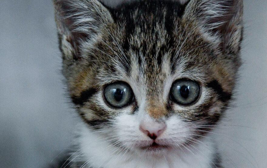 Zollner Entdecken Vier Katzenbabys In Transporter Aus Italien