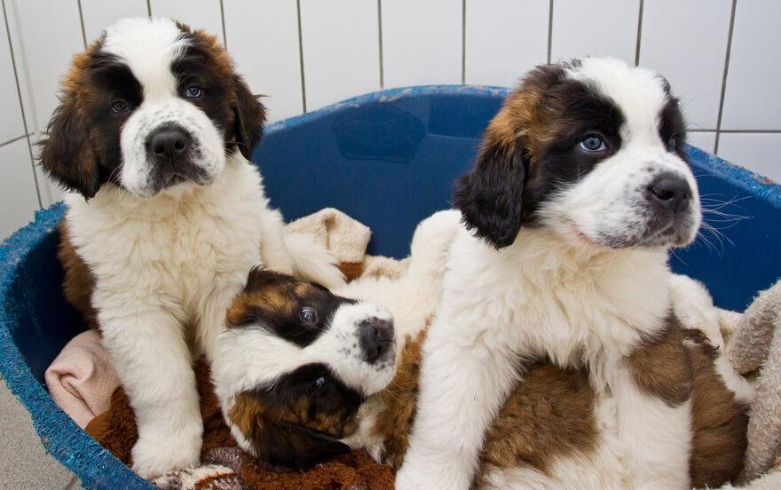 Manner Schmuggeln Hundewelpen Im Auto Nachrichten Aus Bayern